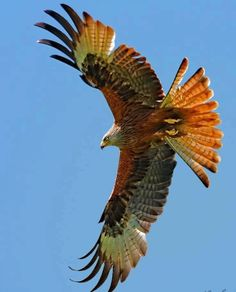 Beautiful Wing span...