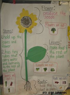 I just looked over this and there are some FANTASTIC ideas for a unit on plants!