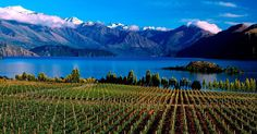 A year-round destination set against the pristine alpine backdrop of Mount Aspiring National Park, you can still discover that totally relaxed Kiwi way of life at Lake Wanaka. Nz South Island, Wanaka New Zealand, Lake Wanaka, Photo Walk, Kiwi, Travel Inspiration, Travelling, Tourism, Backdrops