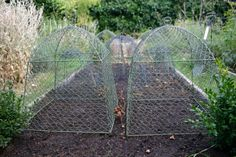 chicken wire cloches - perfect for goats too!