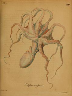 Nova Acta Physico-Medica, Academiae Caesareae Leopoldino-Carolinae Naturae Curiosum, Vol. 12, 1824-25.