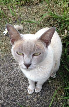 Cat squint