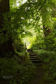 Lead you down the garden path..... - Stairs leading into a forest