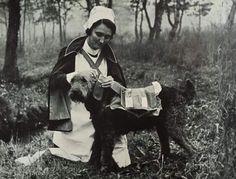 Airedale Terrier Assisting Nurses - c. 1940's