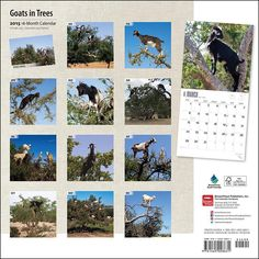 Amazon.com : Goats in Trees 2015 Wall Calendar : Office Products