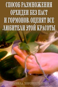 Orchid Flower Arrangements, House Plants, Cucumber, Orchids, Garden, Plants, Floral, Garten, Gardening