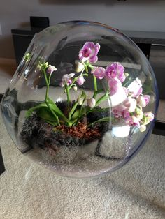 Learn how to make an orchid terrarium, how to choose different orchids for terrarium. What is orchid vivarium and miniature orchid terrarium. Terrarium Diy, Orchid Terrarium, Terrarium Centerpiece, Hanging Terrarium, Lizard Terrarium, Miniature Orchids, Decoration Plante, Paludarium, Deco Floral