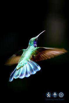 Hummingbird Gardens | Hummingbird garden