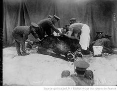 Hôpital pour chevaux : [photographie de presse] / [Agence Rol] - 1