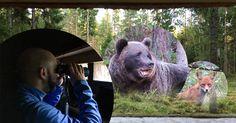 Erfahrungsbericht Bärenbeobachtung Estland: Braunbären beobachten im September in der Hütte Alutaguse von NaTourEst.
