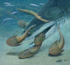 """423-Million-Year-Old Fish Was Once Earth's Largest Vertebrate. The predatory sea creature, dubbed Megamastax amblyodus, which means """"big mouth, blunt teeth,"""" prowled the oceans about 423 million years ago and used its flat teeth for crushing the shells of its slow-moving, hard-shelled prey. - Credit: Brian Choo"""