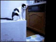 Gato safado.