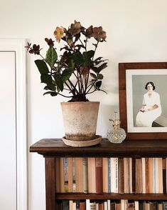 I went plant shopping today! It did my soul good to get out in the sunshine and I brought this sweet flower home with me. Interior Styling, Interior Decorating, Interior Design Boards, Scandinavian Living, My Dream Home, Interior Inspiration, Interior And Exterior, Architecture, Home Furniture