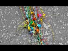 Crumb of mouse brain reconstructed in full detail. Neuroscience: Crammed with connections - YouTube