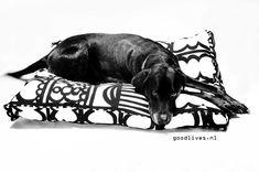 DIY: Zelf een hondenkussen maken (Ikeahack #01) - Goodlives