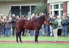DIXIELAND BAND (USA) 1980 - 2010 Sire: Northern Dancer (1961) by Nearctic (1954) Dam: Mississippi Mud (1973) by Delta Judge (1960) Major wins: Pennsylvania Derby (1983) Massachusetts Handicap (1984)