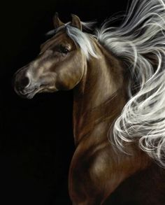 The beuty of a Horse. This is a Chocolate Palomino:black Chocolate body with blond mane and tail. A gorgeous coloring. I love it!. Please also visit www.JustForYouPropheticArt.com for colorful, inspirational art and stories and like my Facebook Art Page at www.facebook.com/Propheticartjustforyou Thank you so much! Blessings!