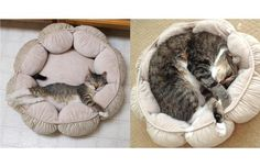 tabby tuxedo kitten grow to fill his bed - 31 Super-cute Cats Who Recreated Their Kittenhood Photos (Slide #108) - Pawsome