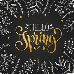 kreidetafel: Hello spring lettering with white leaves hand drawn on chalkboard. Spring time wording. Modern calligraphy for greeting card design. Illustration