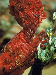 Janine JANET. A ses débuts, dans les années 40, elle réalise paravents, mobilier peint et compositions murales pour de riches particuliers, mais c'est dans la scénographie de vitrines qu'elle déploie son véritable talent. Elle s'inscrit dans une école de création de devantures d'exception, que perpétue aujourd'hui Leïla Menchari avec ses vitrines d'angles de la boutique Hermès.