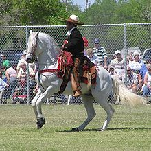 Today's Horse Facts: The Azteca - Full of Grace!