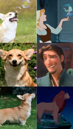 12 Perfectly Matched Corgis and Disney Royals | Oh My Disney