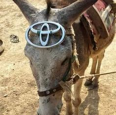 Read Só 198 from the story Só Coisas Legais 3 (MEMES) by CDoceMel (Mel) with reads. Memes, Jamaica, Animals And Pets, Horses, Instagram Posts, Toyota 4runner, Emerson, Funny Things, Motorcycles