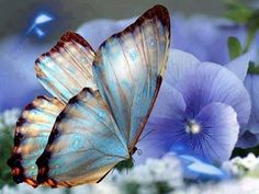 borboletas e azuis