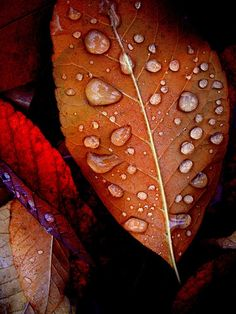 Leaf Rainy Day Raindrops Copper Rusty Red Leaves Metallic Print Nature Fall Autumn Photography getting ideas (smirk smirk) it just rained so I'm going outside! Macro Photography Tips, Autumn Photography, Rainy Day Photography, Photography Flowers, Rain Photography, Photography Portraits, Photography Settings, Foto Macro, Red Leaves