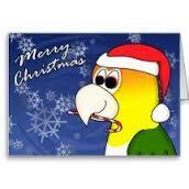 Caique Hoppy Christmas!