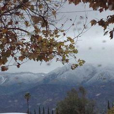 Redlands CA. (12/14/12) Photo by Megan McClain