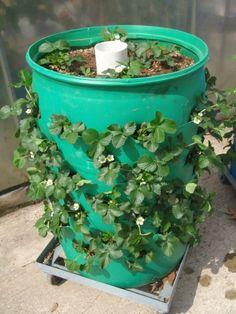 Strawberry garden - GARDEN Vertical Garden 5 Cheap and Easy Garden Ideas! Easy Ways to Save – Strawberry garden Easy Garden, Herb Garden, Vegetable Garden, Garden Plants, Strawberry Planters, Strawberry Garden, Gardening For Beginners, Gardening Tips, Diy Horta