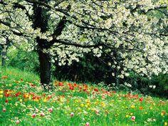 printemps0.jpg (1024×768)