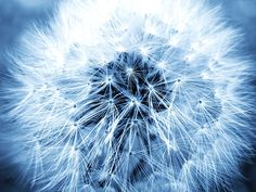 Hope by Cattura - Close up of a dandelion with all the seeds ready to start their very first adventure of their lives. However miniscule it might be, hope is everywhere. Close Up, Dandelion, Seeds, Adventure, Wall Art, Plants, Dandelions, Adventure Movies, Plant