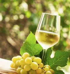 Wine Grape Varieties: Learn About The Best Types Of Wine Grapes - Grapes are are developed on new shoots, called canes, which are useful for the preparation of jellies, pies, wine and juice while the leaves can be used in cooking. They can also be eaten as fresh. This article discusses which grapes are used to make wine.