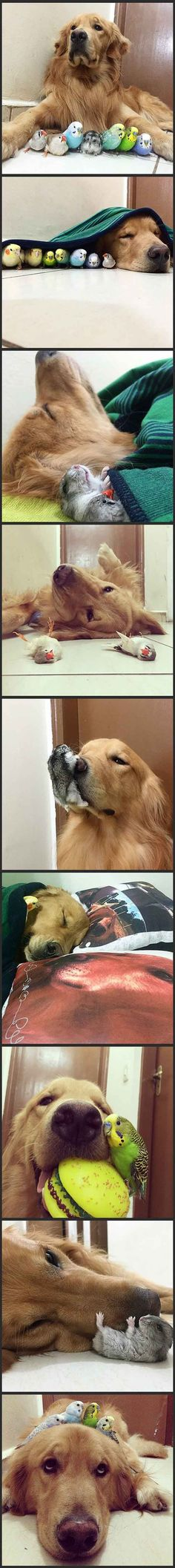 Best of Friends! ❤ A dog, 8 birds, and a cute hamster are best friends...click link for more photos.