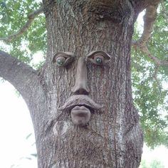 Dagwood Tree Face
