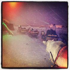 #Reindeer sleigh ride Arctic, Finland, Reindeer, Ring, Travel, Rings, Viajes, Traveling, North Pole