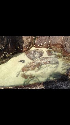 Fish in a rock pool