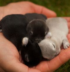Funny pictures about A Handful Of Baby Bunnies. Oh, and cool pics about A Handful Of Baby Bunnies. Also, A Handful Of Baby Bunnies photos. Animals And Pets, Funny Animals, Cute Baby Bunnies, Pictures Of Baby Bunnies, Cute Little Animals, Adorable Animals, Tier Fotos, Hamsters, Cute Creatures