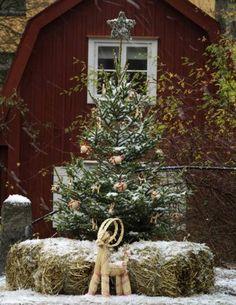 Stjärnklart Gör din egen julstjärna av nedfallna grenar. Utgå från en stjärnformad (två trianglar ovanpå varandra) ståltrådskonstruktion eller en enkel gammal julstjärna. Klipp av grenar i passande storlek och fäst dem med ståltråd eller blomstertråd.