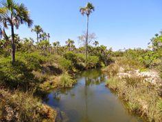 Resultado de imagem para paisagem beira de rio buritizal