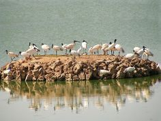 Porbandar Bird Sanctuary in Gujarat, India
