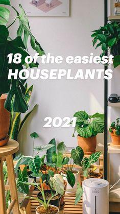 18 of the easiest HOUSEPLANTS   2021