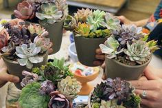 anthropologie workshop tabletop succulent containers
