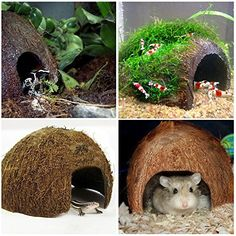 LUFFY Coco Hut - Comfortable Hideout: Calming effect by Simulating Natural Habitat: Non-toxic, Made of Real coconut. Ideal for Aquarium fish, hamster, hermit crabs, spider & reptile  This multipurpose utilitarian aquarium ornament functions as shelter, security, privacy, entertainment and nursery for fish - all in one. Its natural composition, texture and look make fish feel in their element. The Coco Hut also affords them a much-needed retreat from the stress and hardships of the aquarium…