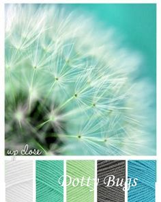 white, aspen, spring green, graphite, turquoise