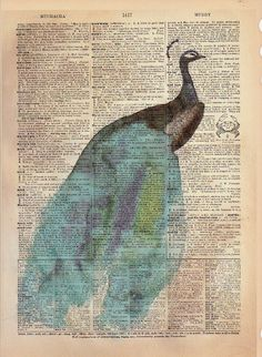 Peacock Dictionary Print from Mai Autumn