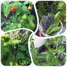 From my garden ...