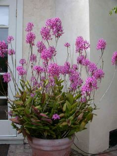 Simply beautiful, what is this plant?